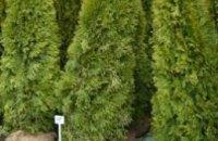 В Днепропетровске высадят деревья
