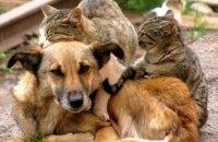 Бездомные животные – проблема не государства, а местного самоуправления, - Дмитрий Щербатов