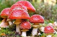 На Днепропетровщине беременная женщина отравилась грибами