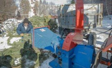 В Днепре коммунальные предприятия начали отапливать елками
