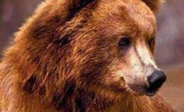 Днепропетровских медведей хотели забрать в Закарпатье