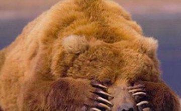 Корейские медведи начали скорбеть по Ким Чен Иру