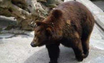 В Николаевском зоопарке медведи загрызли человека насмерть