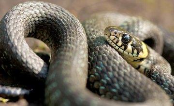 В Кривом Роге мужчина обнаружил змею в салоне своего автомобиля