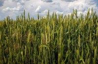 В Україні відкрився ринок землі: скільки гектарів та за якою ціною  можуть продати у Дніпропетровській області