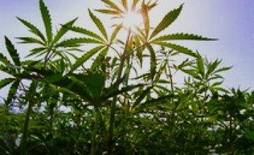 В Днепропетровске у 30-летнего мужчины милиционеры изъяли 10 кг марихуаны