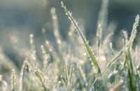 В Днепропетровской области на выходных ожидаются заморозки на поверхности почвы