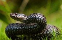 Во Львовской области змея напала на 17-летнюю девушку