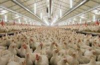 Украина получила право поставлять в ЕС продукцию птицеводства