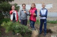 Ученики высадили более 20 сосен на территории гимназии №37 в рамках программы «Социальная реконструкция» Геннадия Гуфмана(ВИДЕО)