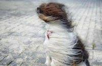 16-18 марта на Днепропетровщине объявлено штормовое предупреждение