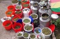 В Днепродзержинске у местного жителя нашли 200 кг элитной марихуаны