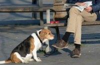 В Испании создали базу ДНК собак для анализа экскрементов