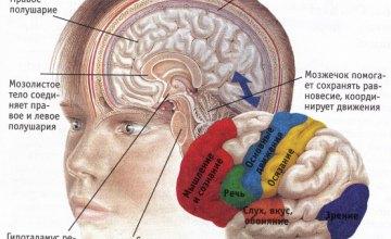 Как заставить мозг работать активнее