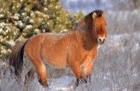 В сети появились зимние фото животных из зоны отчуждения (ФОТО)