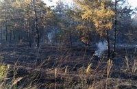 В Новомосковском районе сгорело 1,5 га хвойного леса