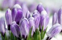 Бережемо первоцвіти: у мерії Дніпра закликали не збирати і не купувати ранні весняні квіти