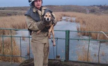 На Днепропетровщине спасатели вытащили собаку из замерзшего водохранилища