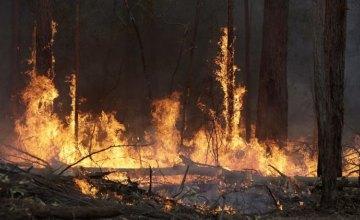 На Днепропетровщине выгорел 1 га леса