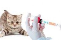 Люди спрашивают - специалисты отвечают: где вакцинировать животных (ПОЛЕЗНО)