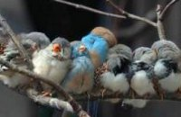 В донецком заповеднике массово гибнут птицы