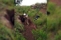В Кривом Роге корова провалилась в 3-метровую яму  (ВИДЕО)