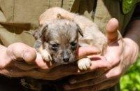 В Днепре «сердобольная бабушка» много лет издевалась над собаками ради «бизнеса» (ФОТО)