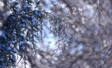 Синоптики рассказали, какой будет погода в Украине в последнюю неделю зимы