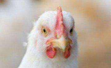 Россия снимает 5-летний запрет на ввоз украинской птицы