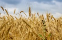 На Дніпропетровщині зібрали вже понад 500 тис тонн озимих ячменю та пшениці