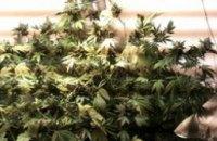 В Харькове правоохранители изъяли более 250 кг марихуаны (ФОТО)