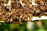 В Харьковской области мужчина умер от укуса пчелы