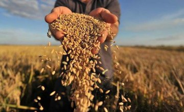 Эксперты рассказали о ситуации с урожаем подсолнуха и зерновых культур на Днепропетровщине