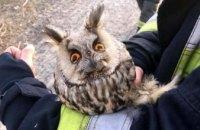 В Днепре из пожара в камышах спасли сову (ФОТО)