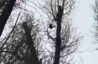 В Днепре спасатели освободили сойку, запутавшуюся в старых нитях на дереве (ВИДЕО)