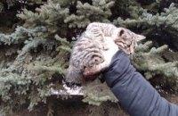 На Днепропетровщине спасатели помогли котёнку слезть с дерева