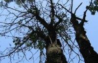 До конца ноября в Днепропетровске вырубят около 1,5 тыс. деревьев