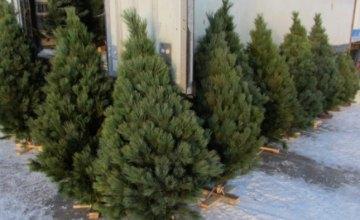 Днепрянам рассказали, сколько в этом году придется заплатить за новогоднюю елку