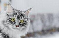 7 и 8 февраля на Днепропетровщине ожидается существенное похолодание
