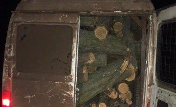 На Днепропетровщине задержали «черных» лесорубов с полным автомобилем древесины