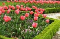 Павлоградская пенсионерка торговала цветами, украденными с клумб города