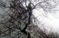 В Зеленодольске спасатели помогли коту спуститься с дерева