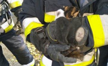 В Днепре спасатели сняли котенка с 4-метрового дерева