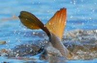 В Днепропетровской области за неделю у браконьеров изъяли более 70 кг рыбы