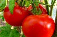 Из-за дождей в Украине будет меньше томатов и пшеницы