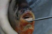 В США поймали рыбу с человеческими зубами (ФОТО)