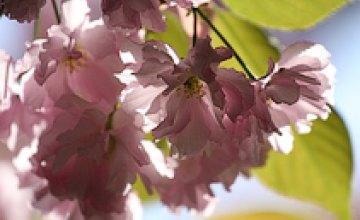 В «Литературном Приднепровье» презентуют японскую красоту