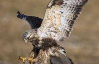 В Днепре спасают необычную хищную птицу (ФОТО)