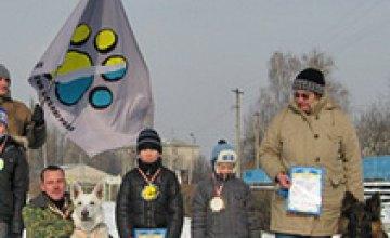 Жители Павлограда устроили заезд на собаках (ВИДЕО)