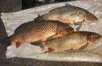 На Днепропетровщине рыбаки незаконно выловили 175 кг водных биоресурсов, - госрыбагентство